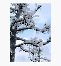 Freezing Tree Photographic Print
