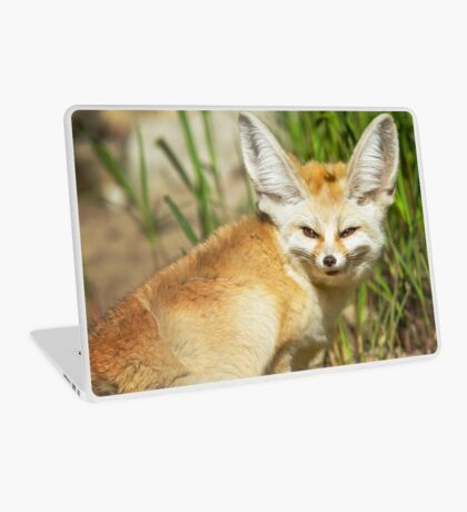 Fennec Fox Laptop Skin