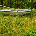 Afloat in a Forest of Queen Anne's Lace by Bryan D. Spellman