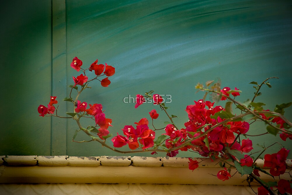 Red Flowers by chrissy53