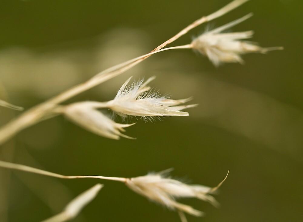 Snow Grass by Jenni77