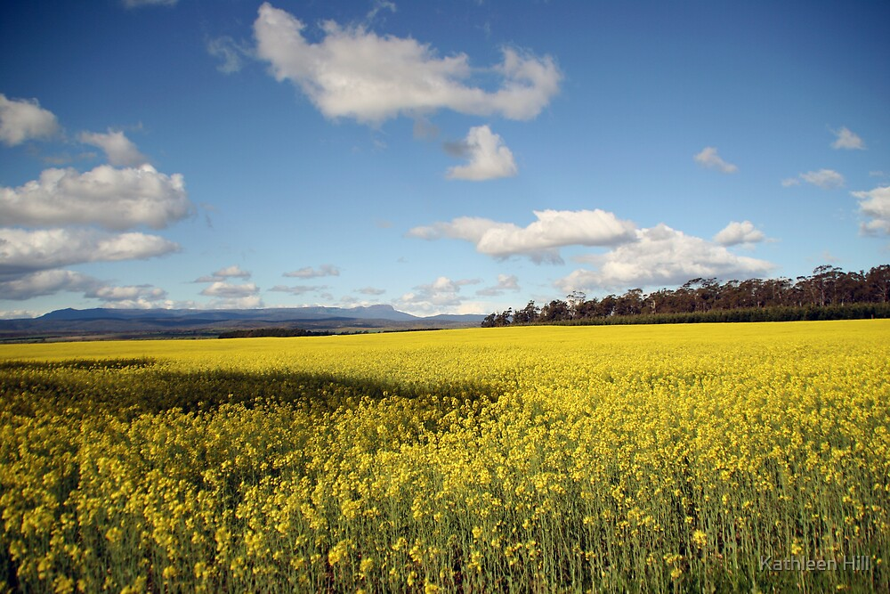 Fields of Gold by Kathleen Hill