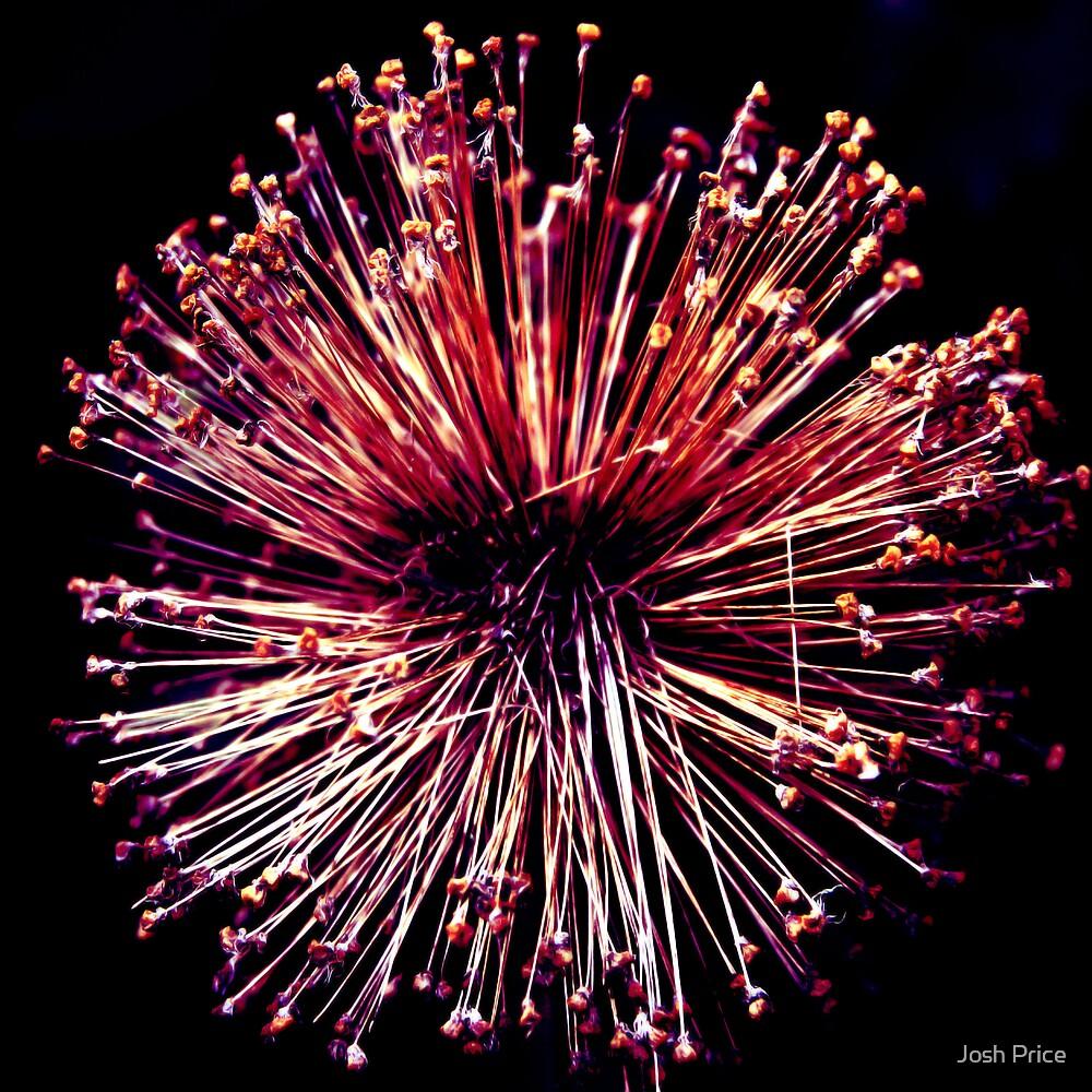 Supernova by Josh Price