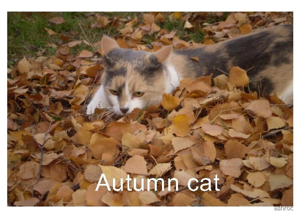 Autumn cat by ashroc