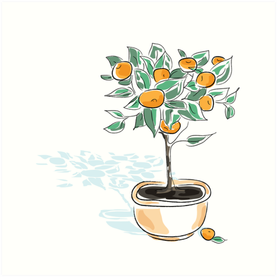 Citrus tree in a pot by oksancia