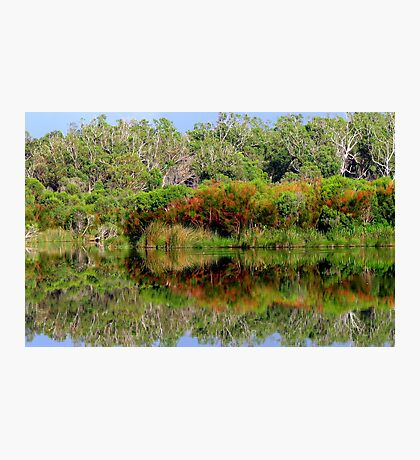 Forest Reflection 2 Photographic Print