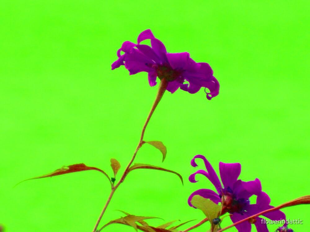 violet flower by flowerindattic