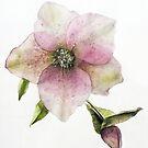 «Flor en Acuarela» de Roz McQuillan