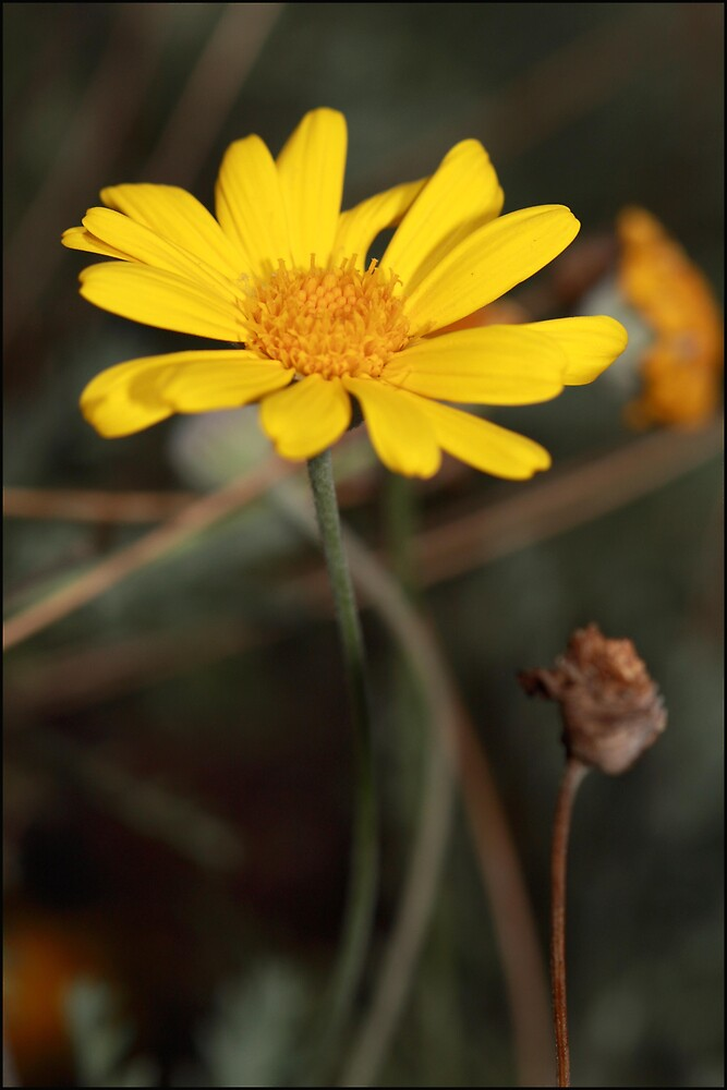 Yellow by Nam Ngueyn