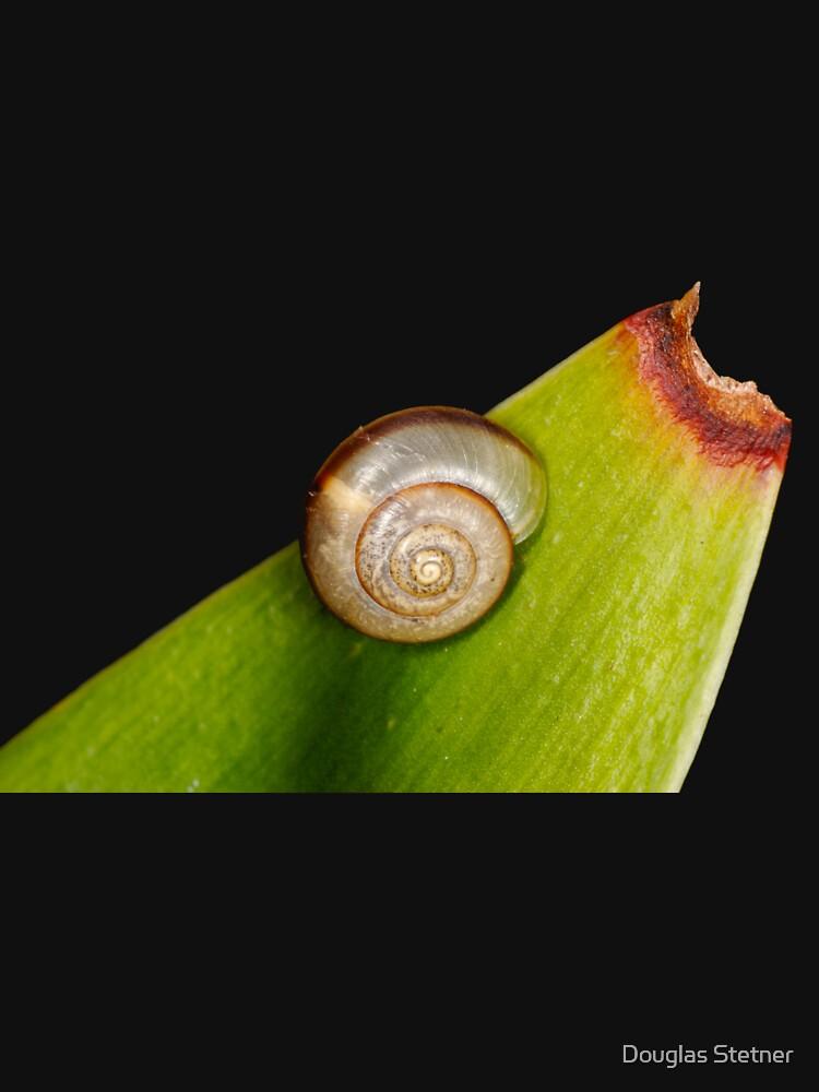 Snail on Snake plant by stetner
