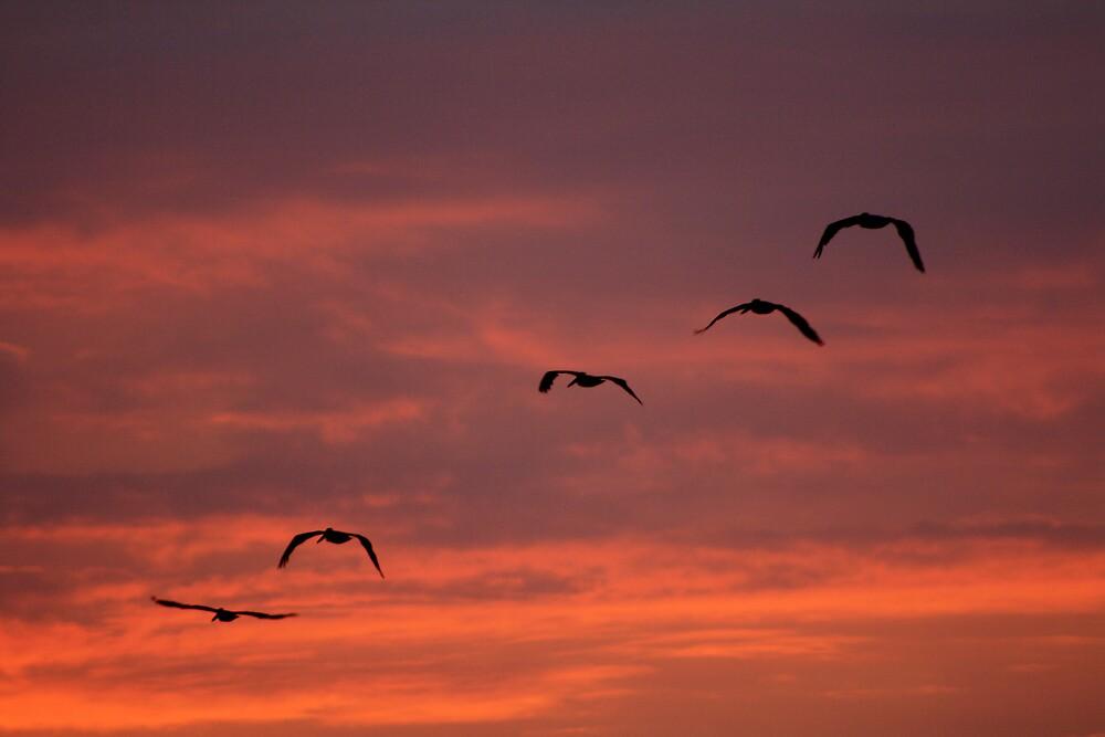 Pelican sunrise by fotoeluver