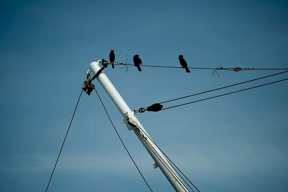 birds on a wire by Yorrik