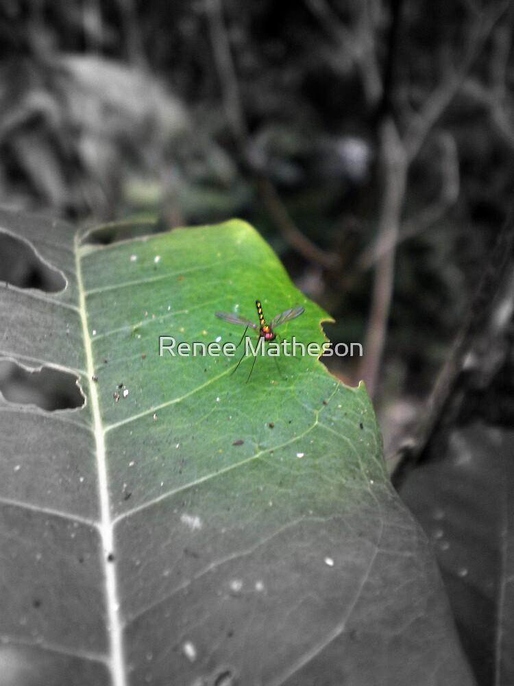 baby bug by Renee Matheson