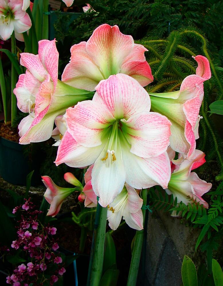 Pink Elegance by shadyuk