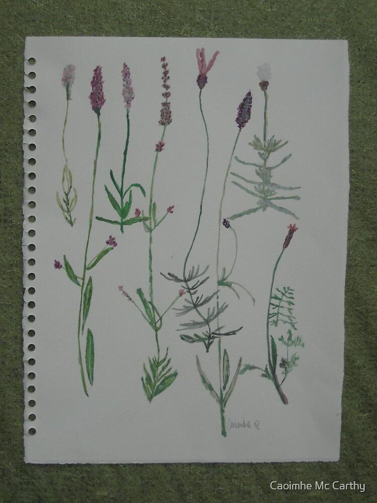 Lavender watercolour by Caoimhe Mc Carthy