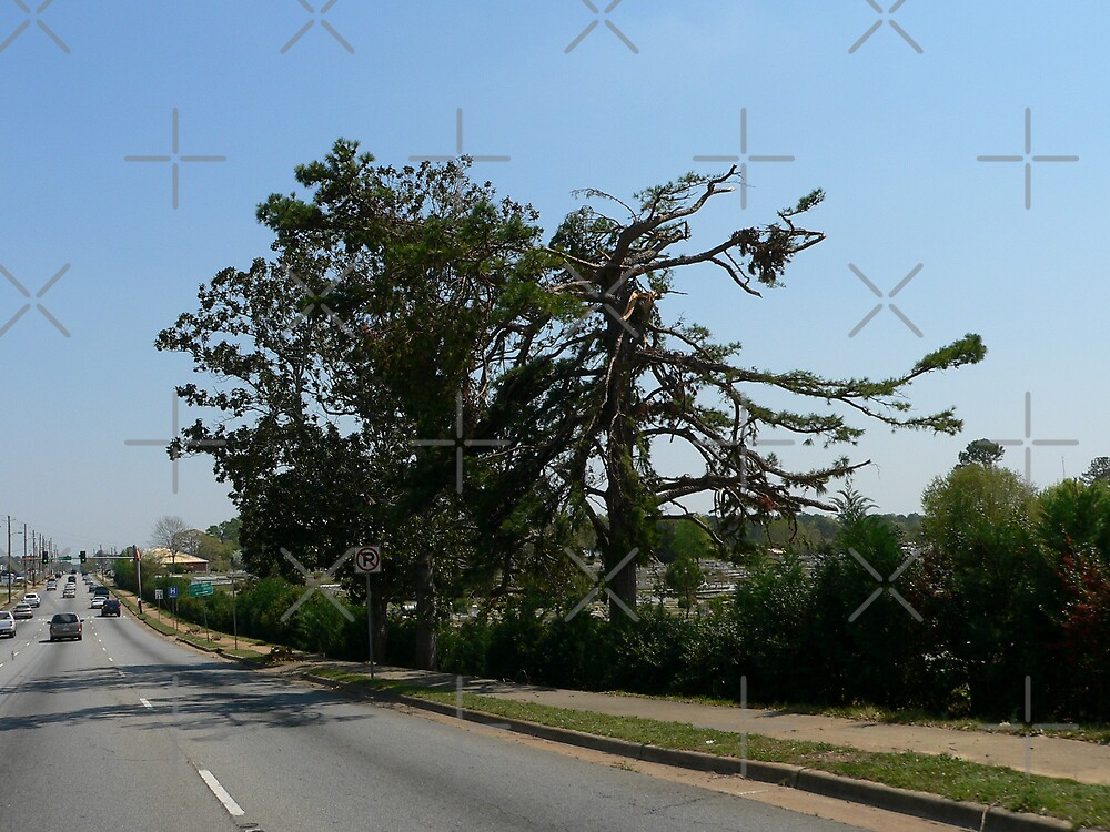 Massive Tree Torn Up by kevint