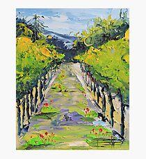Vineyard winery Carmel California Photographic Print