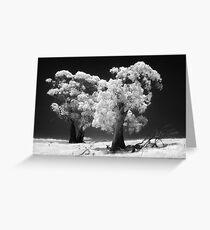 038 Trees in IR Greeting Card