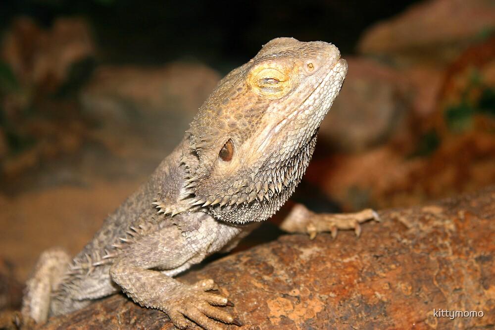 Lizard? by kittymomo