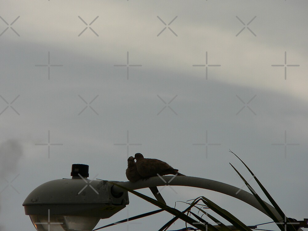 Two Doves Kissing by kevint