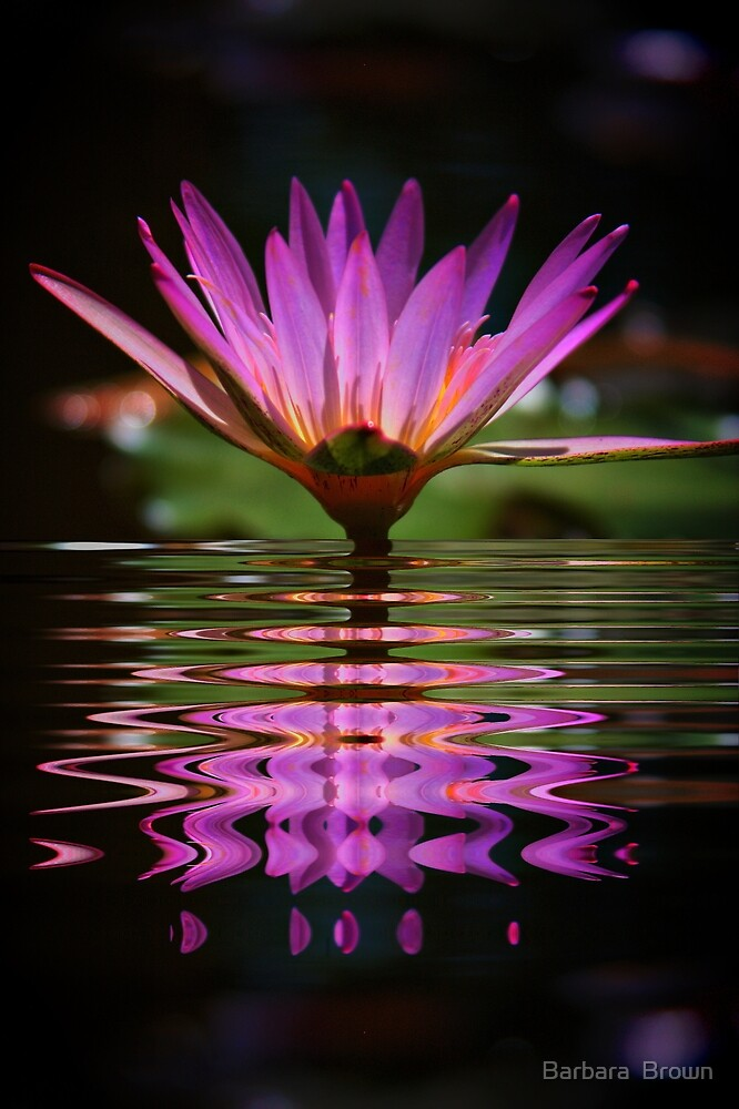 Purple Fantasy by Barbara  Brown