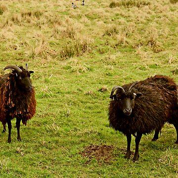Feeling Sheepish by IanFoss
