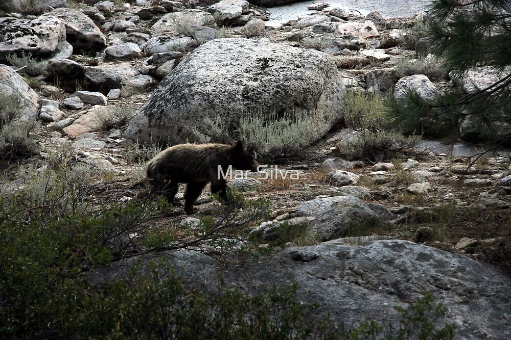 Yosemite's Black Bear by Mar Silva