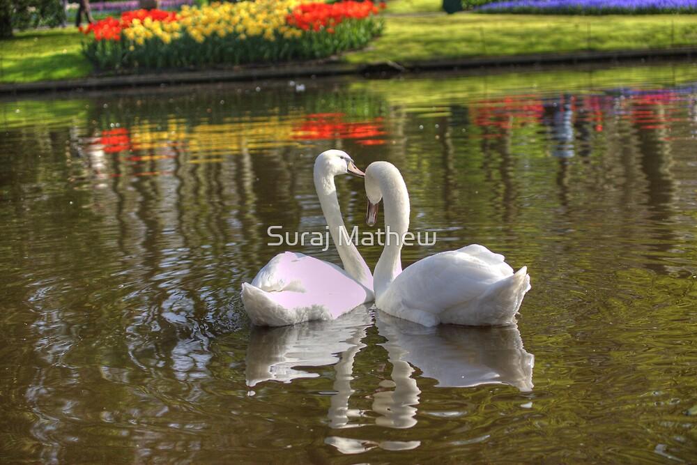 Keukenhof Garden, Lisse Netherlands by Suraj Mathew