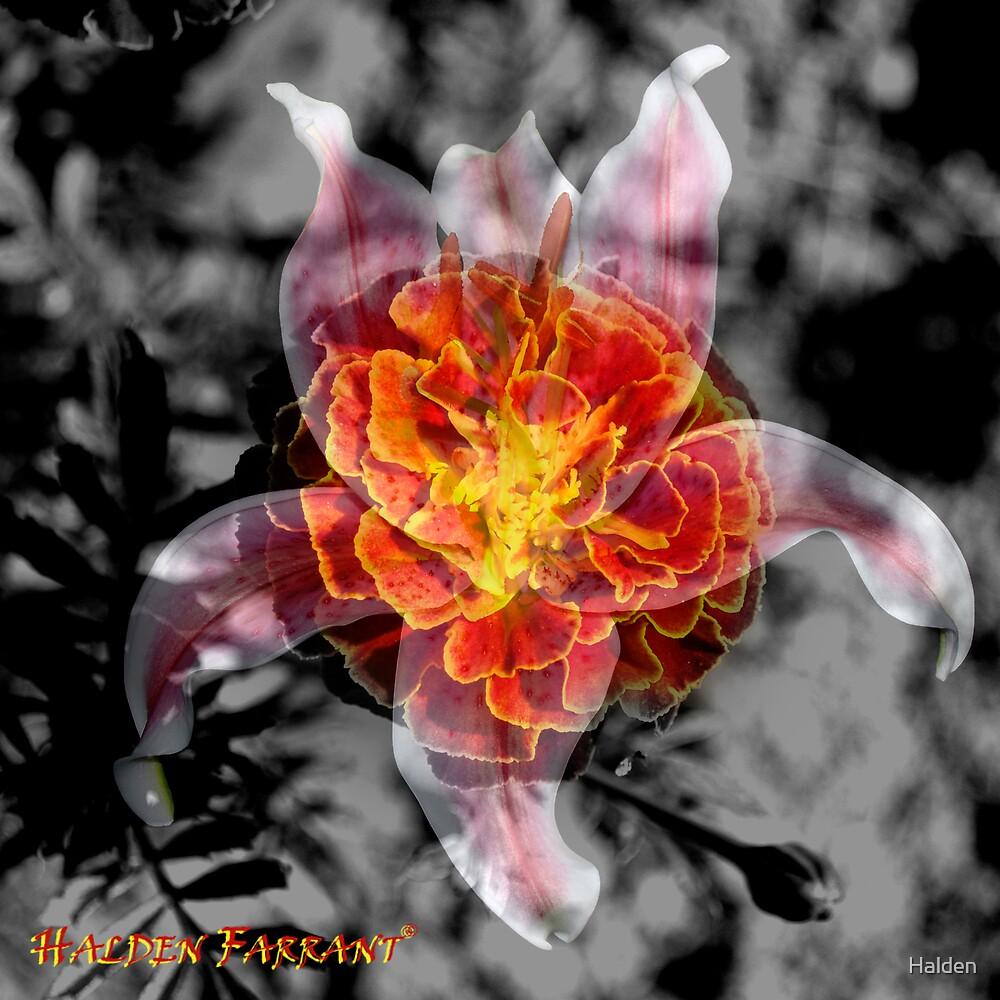 Brainy Flower Blender by Halden
