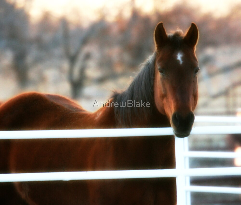 Mare on the farm by AndrewBlake