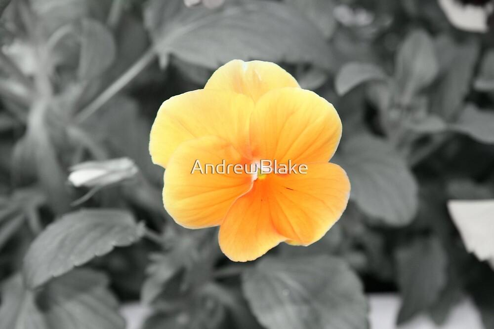 Little yellow flower by AndrewBlake
