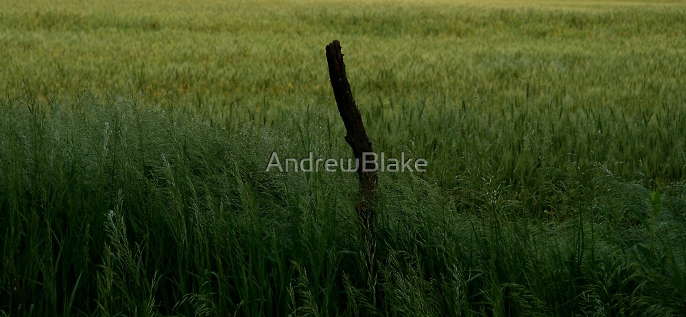 A lonely fence post by AndrewBlake