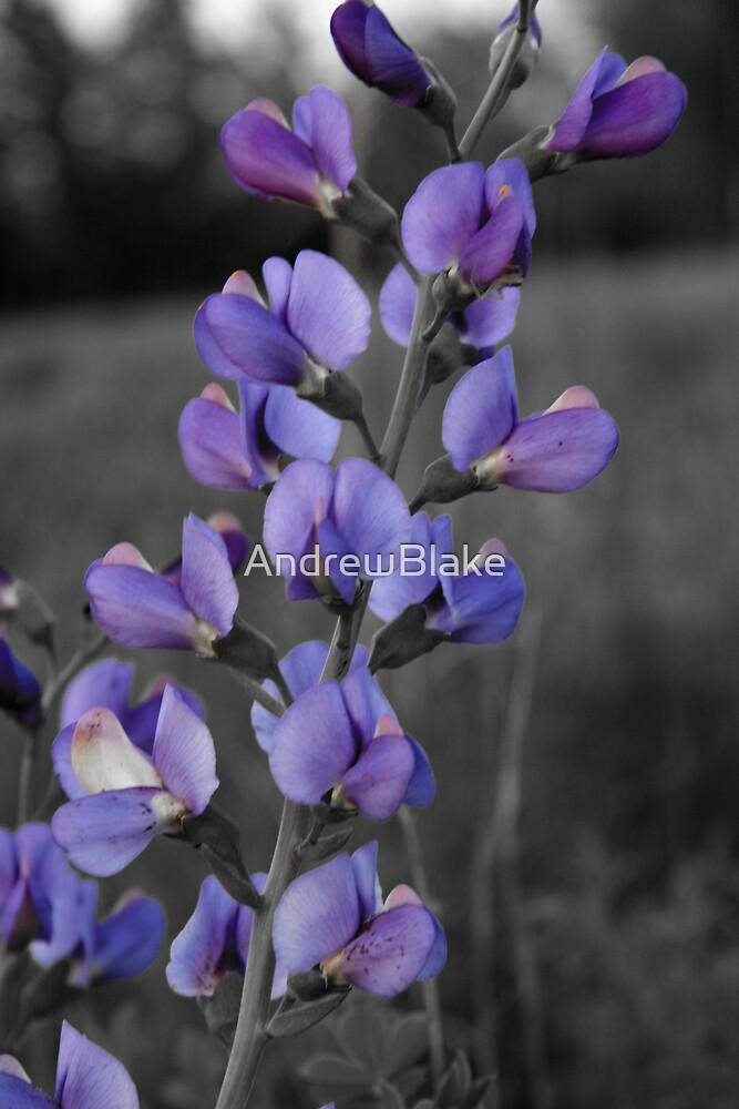 Little purple flowers in bloom by AndrewBlake