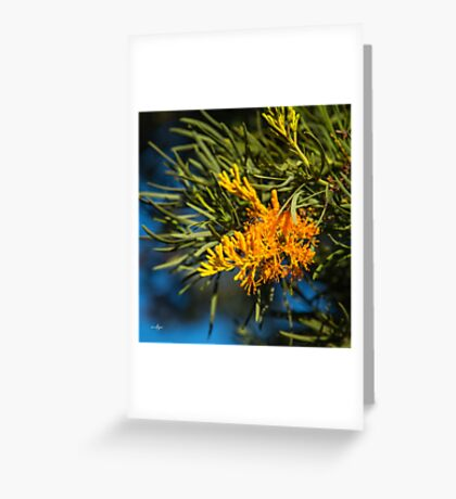 Western Australian Christmas Tree Greeting Card