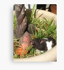 Happy Hamster 2 Canvas Print