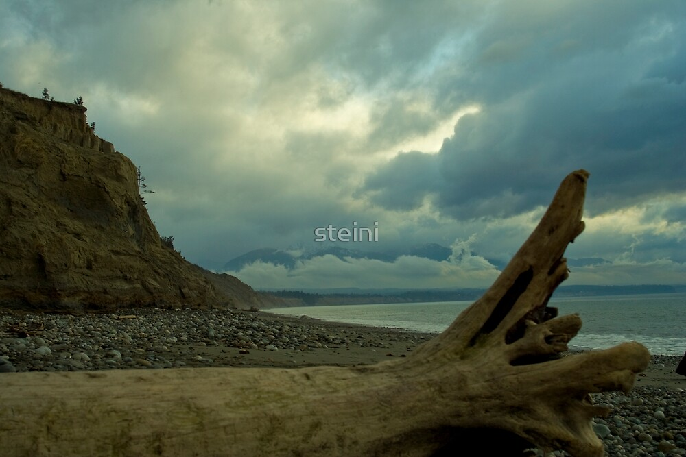 Driftwood by steini