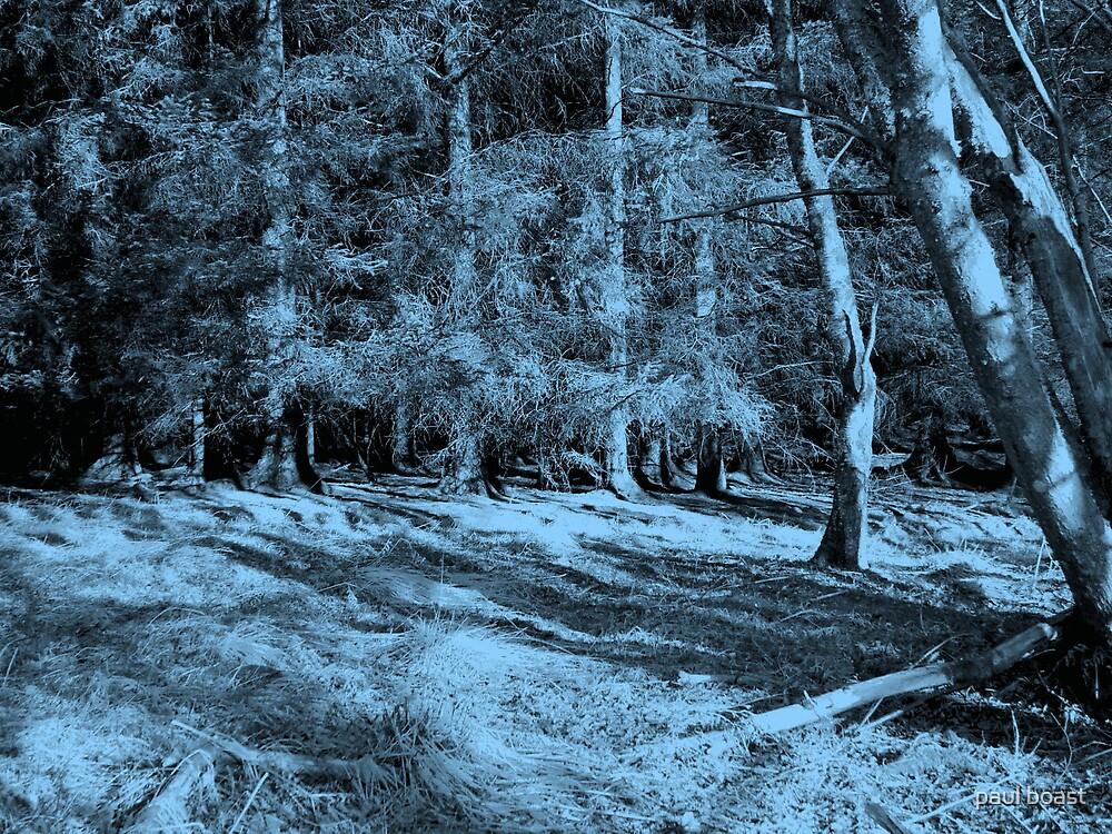 Dark Forest by paul boast