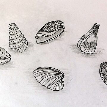 Seashells - Art from the Sea by leororing