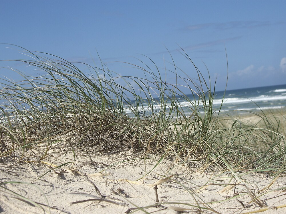 Noosa through the dunes by Phyxius
