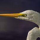 Great Egret by Bette Devine