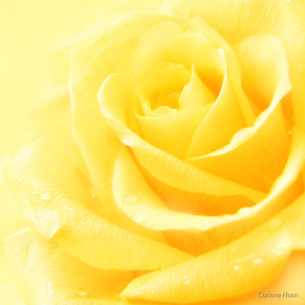 Yellow Rose by Corinne Noon