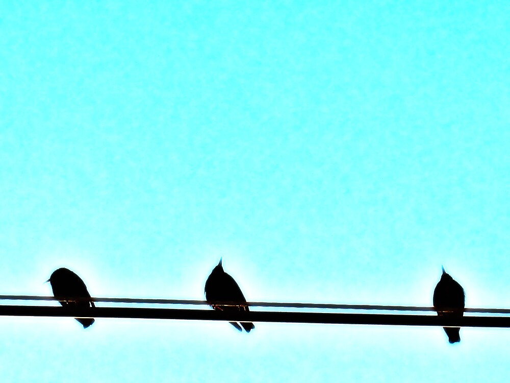 Three Little Birds by Tommy Seibold