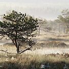 10.6.2017: Pine Tree at Marsh II by Petri Volanen