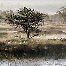 10.6.2017: Pine Tree at Marsh III by Petri Volanen
