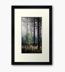 10.6.2017: Young Birch Framed Print