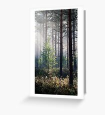 10.6.2017: Young Birch Greeting Card