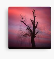 0752 Affected by Drought Canvas Print