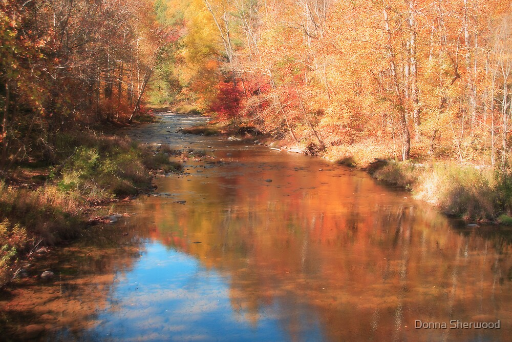 Autumn Lights by Donna Sherwood