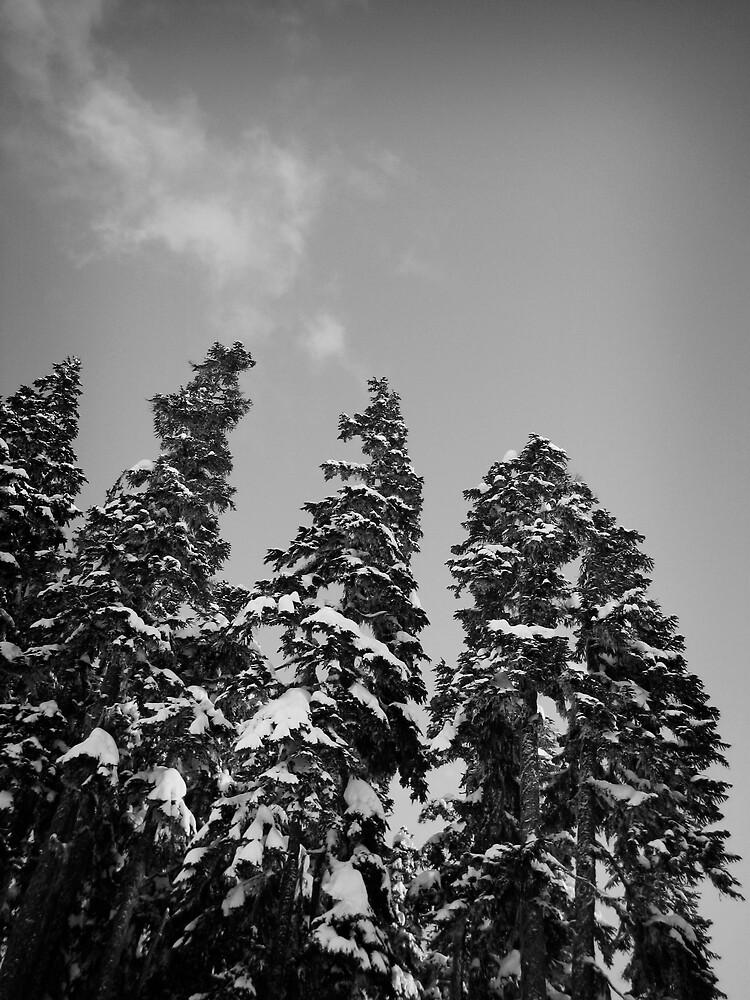 Trees with snow by tashunka