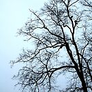 This Old Tree by Atreju Hood